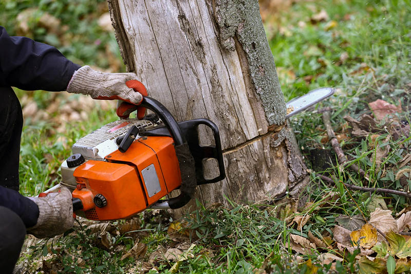 Tree Service In Lancaster